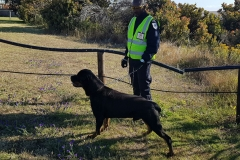 personal-protection-guard-dogs