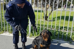 protection-dogs-near